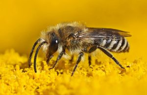 Sie können die Wildbiene unterstützen indem sie ein Insektenhotel kaufen / Insektenhaus.