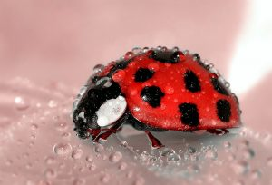 Ein Marienkäfer sitzt auf einem Blatt.
