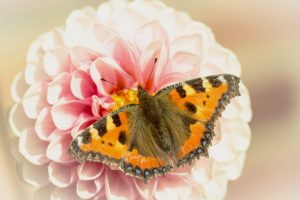 Schmetterling sitzt auf einer Blume. Ratgeber wenn man ein Schmetterlingshotel kaufen möchte.